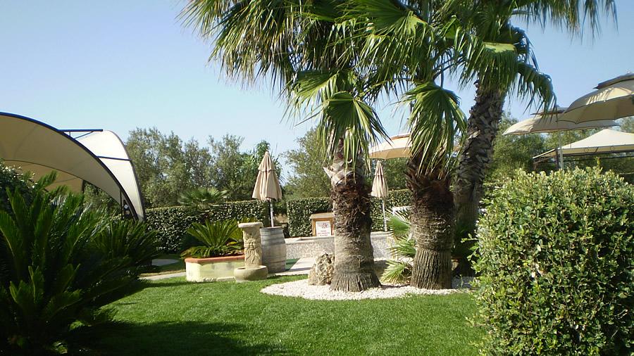 allestimanto giardini , prato verde, piante di palma nei giardini